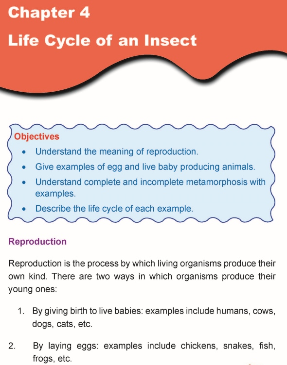 Grade 5 Science Lesson 4 Life Cycle of an Insect