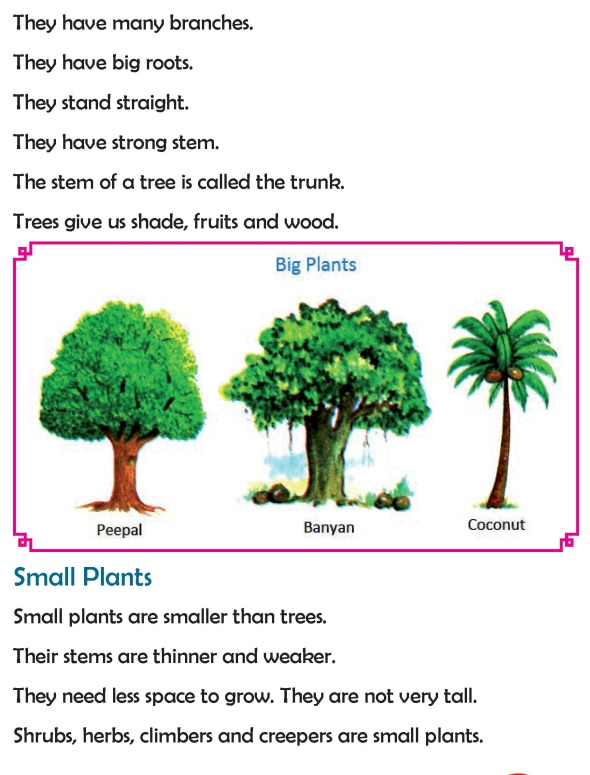 grade 2 science lesson 6 kinds of plants primary science. Black Bedroom Furniture Sets. Home Design Ideas