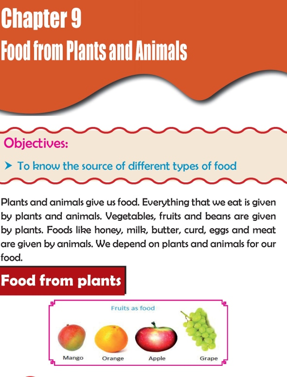 Grade 2 Science Lesson 9 Food from Plants and Animals
